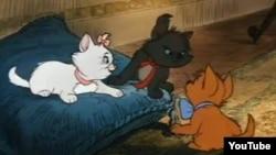 تصویری از گربههای اشرافی