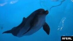 Donjecki delfini