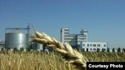 Пшеничное поле на фоне завода. Таинша, Северо-Казахстанская область, сентябрь 2006 года.