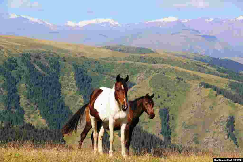 Лошади на плато Ассы.