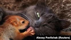 Фото кішки Пуши з білченям, яке увійшло в список найпривабливіших знімків за версією CNN