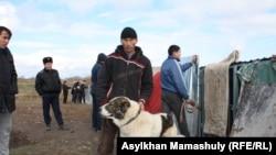 Житель села Шамалган Куандык Мусаев со своим псом. Узынагаш, 10 ноября 2014 года.