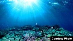 Australi: Great Barrier Reef