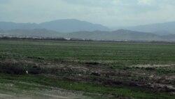 Türkmenistan şor ýere tohum atyp, TW-de 'ýokary hasyl almagyny' dowam etdirýär, daýhanlar nägile