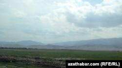 Засеянное поле в Гьоктепе. Туркменистан, март 2018 года.