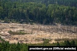 Знищена ділянка лісу під час незаконного видобутку бурштину. Житомирська область, 12 серпня 2019 року