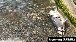 Мертвый дельфин на пляже в Судаке