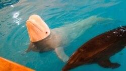 Футурошок. Подводные тюрьмы. Почему надо запретить дельфинарии?