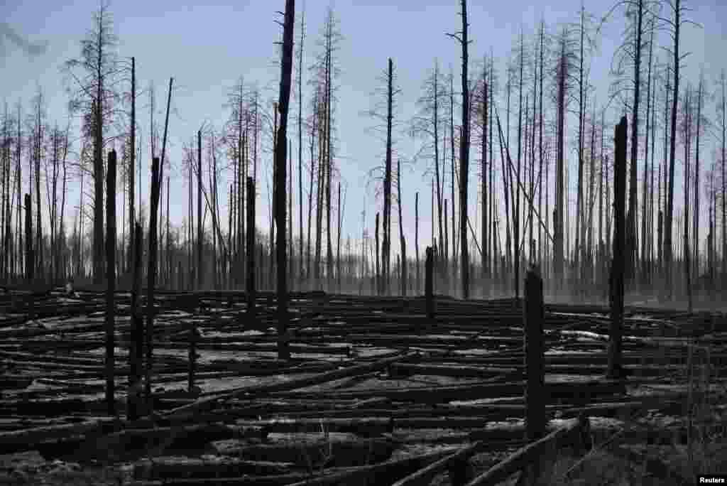 Лісова пожежа залишила після себе обгорілі дерева поблизу населеного пункту Поліське. 12 квітня 2020 року. Директор Департаменту реагування на надзвичайні ситуації ДСНС України Володимир Демчук заявив 13 квітня, що пожежа не несе загрози для АЕС