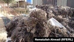 گیاه دارویی سرخ چوب که نسل آن در بدخشان به حالت نابودی قرار دارد. 16 May 2019