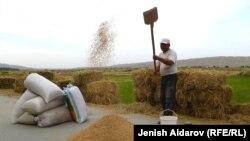 Қырғызстанның Баткен өңіріндегі күріш еккен дихан. (Көрнекі сурет)