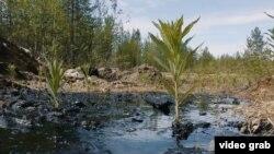 Разлив нефти в Коми. (Архивное фото)