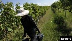 А что думают по поводу выдачи ваучеров сами фермеры и крестьяне?