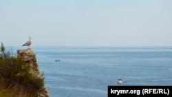 Чайка на скале у входа в Балаклавскую бухту