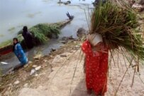 Marsh Arabs gathering reeds near Al-Basrah in March (AFP)