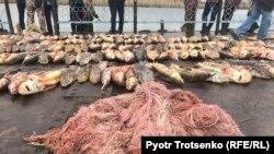 Сети, конфискованные у подозреваемых в браконьерстве. Атырау, 5 ноября 2017 года.