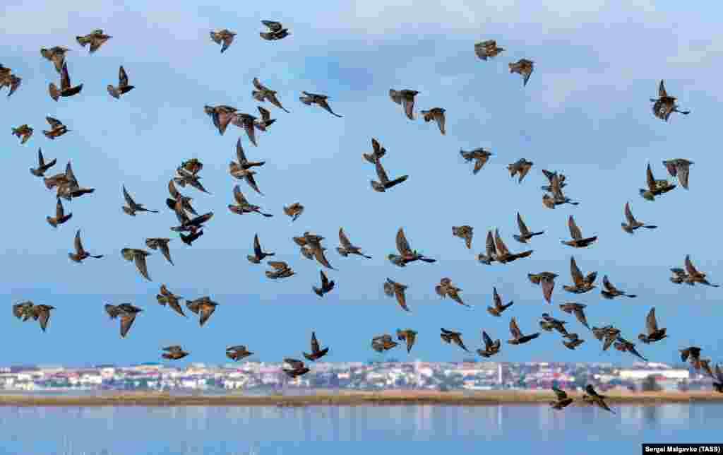 Qırımda Yarılğaç köyü yanında sığırçıqlar. Yarılğaçnıñ etrafı yanvarnıñ başında nasıl olğanını mında baqa bilesiñiz