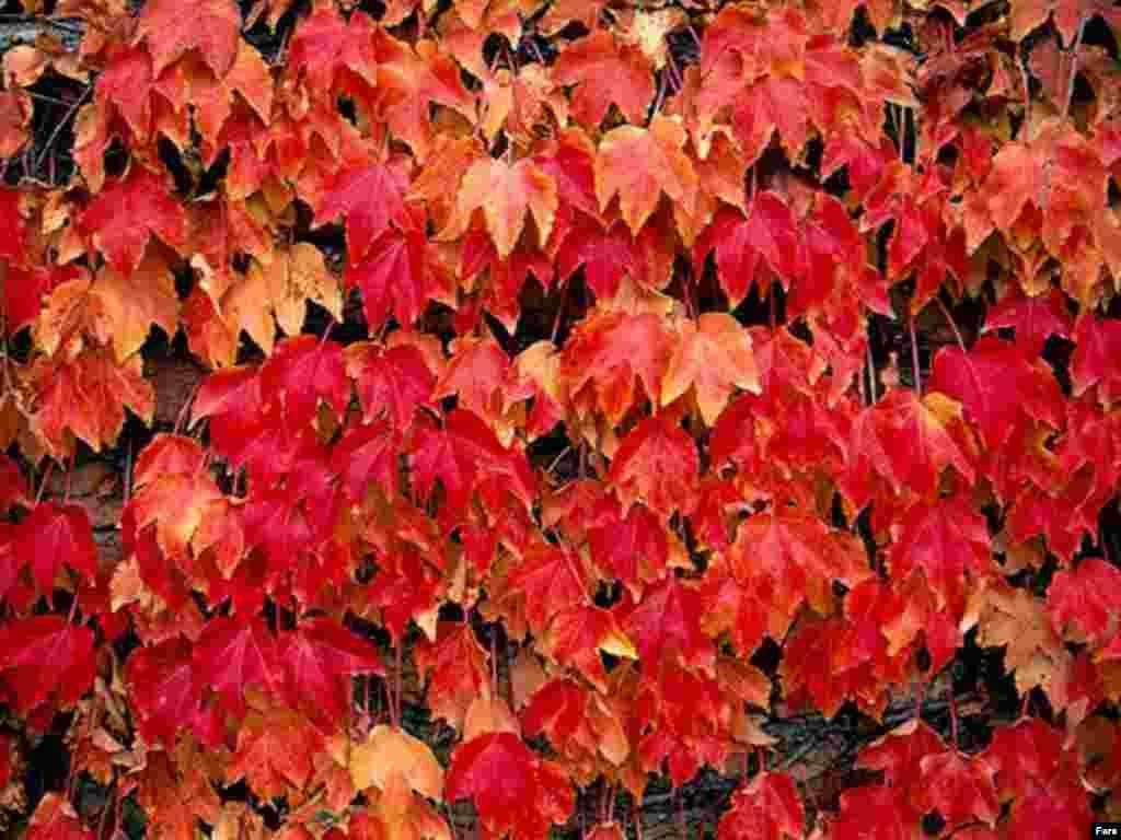 پادشاه فصلها پاییز