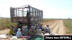 Работающие на хлопковом поле узбекистанцы во время обеденного перерыва. Южно-Казахстанская область, 17 сентября 2015 года.