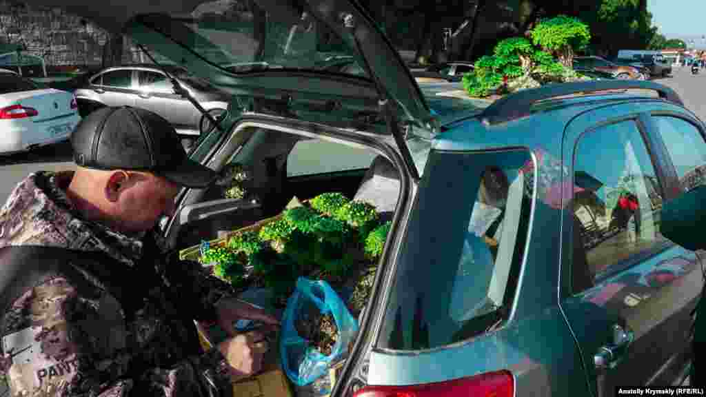 Aqmescit ressamı İgor ise yalıda özü yapqan bonsaylarnı sata