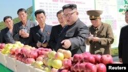 Түндүк Корея лидери Ким Чен Ын айыл чарбасын кыдырган учур. Сүрөт 21.09.2017-ж. таркатылды, бирок качан тартылганы белгисиз.
