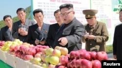 Лидер КНДР Ким Чен Ын даёт указания при посещении фруктового сада.