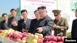 Солтүстік Корея басшысы Ким Чен Ын жеміс-жидек өнімдері туралы нұсқау беріп тұр. (2017 жылғы 21 қыркүйекте таратылған сурет.)