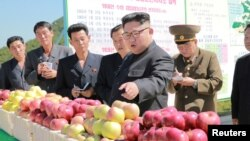 Лидер КНДР Ким Чен Ын даёт указания при посещении фруктового сада