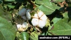 Pagta meýdany, Türkmenistan.