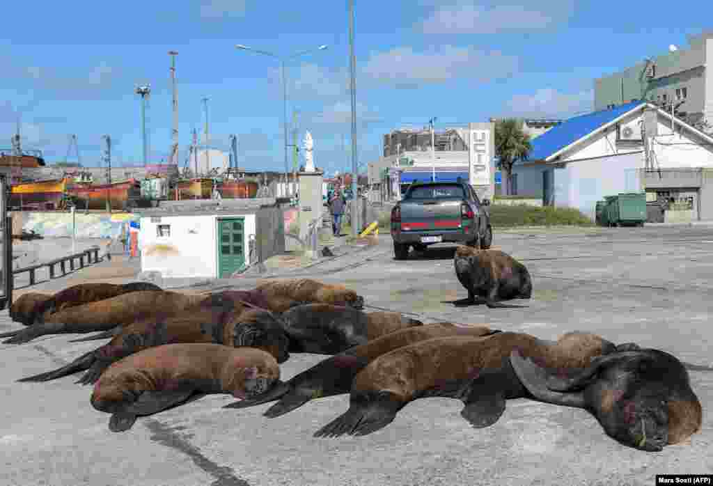 Sea lions lounge on a sun-soaked pavement in the usually bustling harbor of Mar del Plata, Argentina, on April 16.