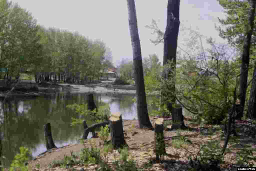 Несколько лет в парке проводится реконструкция и вырубка деревьев.