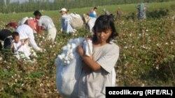 Өзбекстандагы пахта талаасы