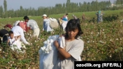 Schoolchildren and women pick cotton in Uzbekistan in late September 2011.