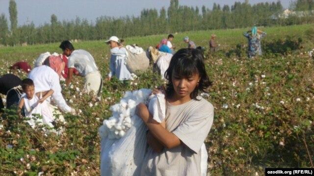 Schoolchildren and women pick cotton in Uzbekistan in late September 2011.