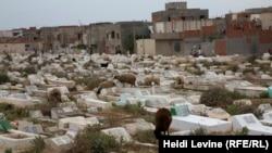 Тунис қаласы маңындағы зиратта қой жайылып жүр.