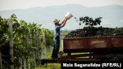 Грузинские власти настаивают, что субсидирование государством виноградарной отрасли является единственным выходом из положения