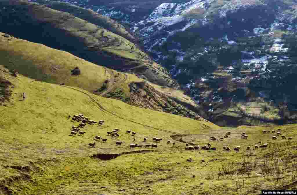 По словам бывшего главы муниципалитета Рамиза, почти все жители села занимаются разведением крупного и малого рогатого скота