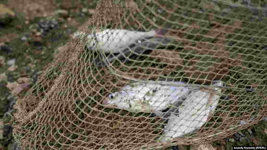 Чотири підлещики – весь улов одного з рибалок за пів дня