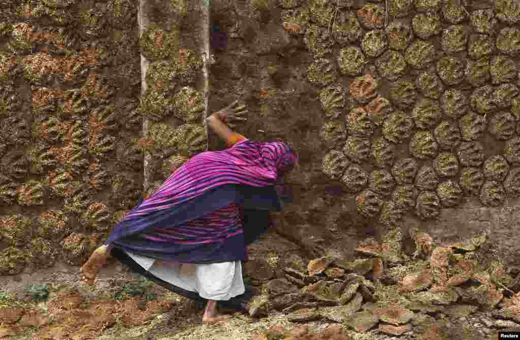 A woman pastes cow dung cakes on a wall for drying in the northern Indian city of Allahabad. (Reuters/Jitendra Prakash)