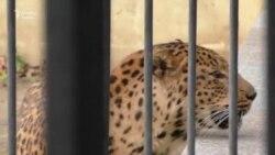 """Bakı zooparkında hər gün heyvanların hüququ pozulur"""