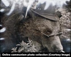 Медведь, убитый во время одной из охотничьих поездок Чаушеску, с сигаретой в ноздре, в очках и со шляпой.