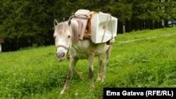 """""""Товаренето на коня не е много лесно, защото винаги трябва да внимаваш всичко да е добре балансирано"""", казва Ема."""