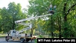 Fát gallyaznak egy emelőkosaras járműből a Főkert munkatársai a Margitszigeten