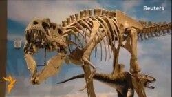 Lythronax Agrestes, динозавр Юрского периода