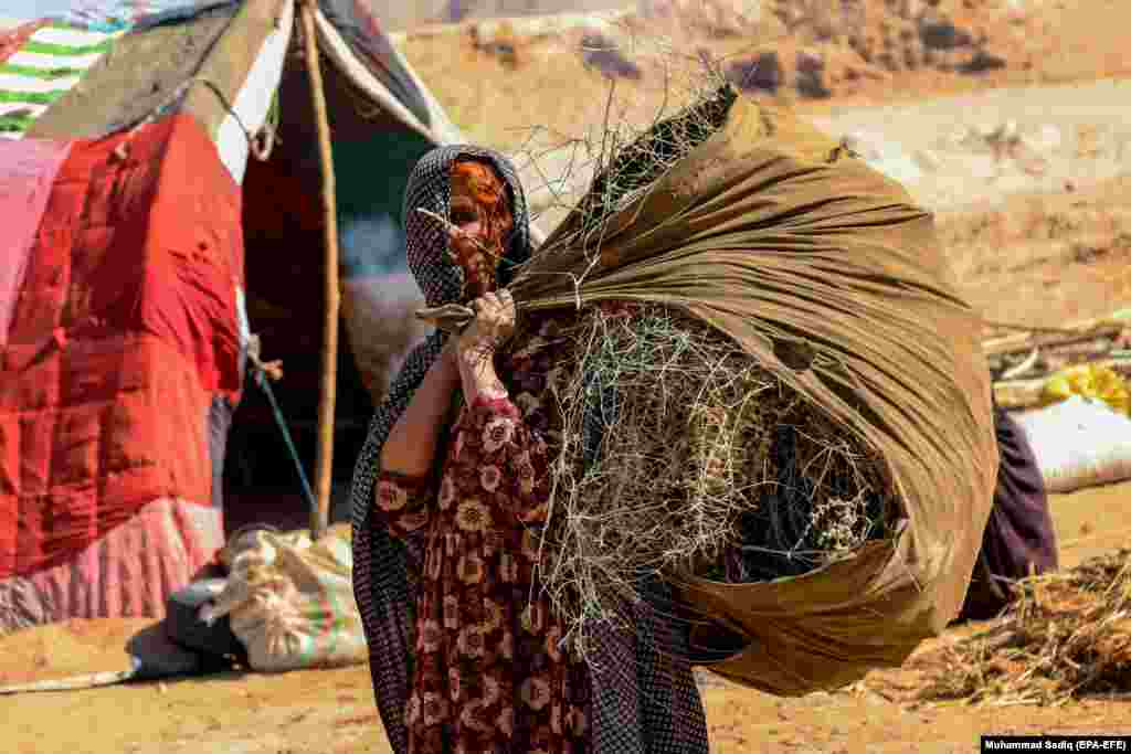 An Afghan woman carries dried branches outside a temporary refugee camp near Kandahar. (epa-EFE/Muhammad Sadiq)