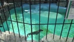 Letnje žege u Beo zoo vrtu