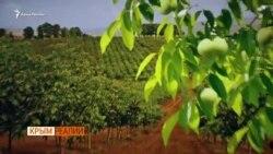 Как заработать на орехах в Крыму   Крым.Реалии ТВ (видео)