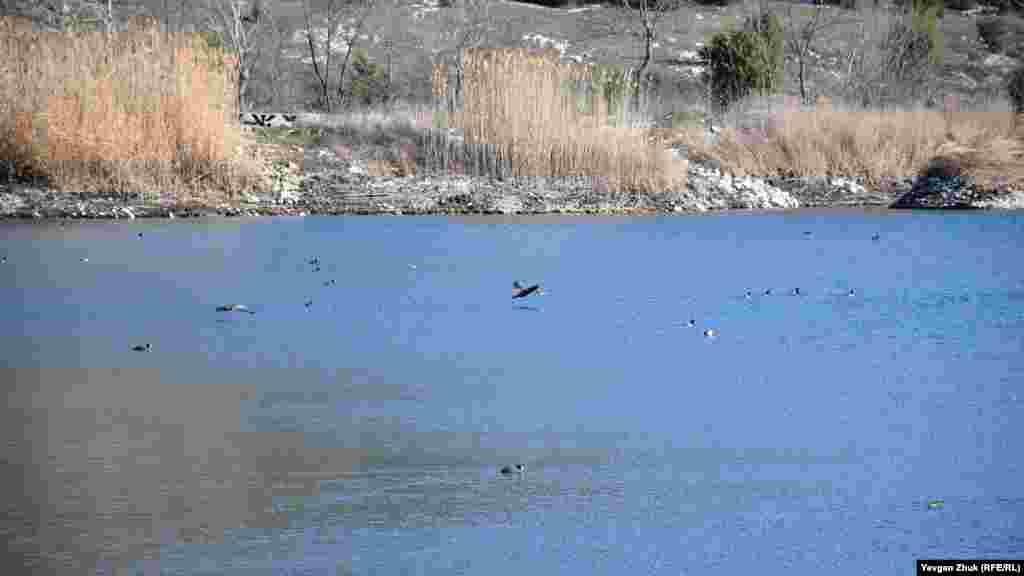 На озере у горы Гасфорта живут несколько видов уток