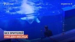 Животные приморского океанариума скучают по зрителям