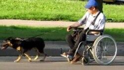 Такое жыцьцё: сабака возіць інваліда